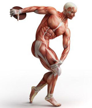 how fast can you build muscle 4 How Fast Can You Build Muscle? 5 Factors That Affect Muscle Growth