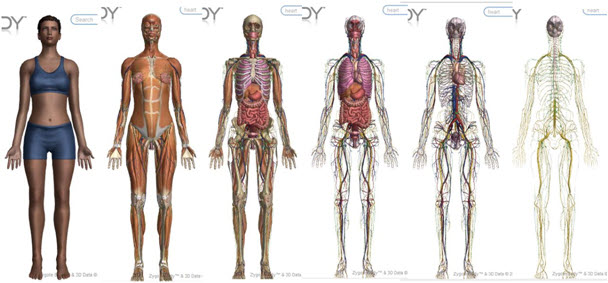 Zygote Body Review: Free 3D Human Anatomy App - BuiltLean