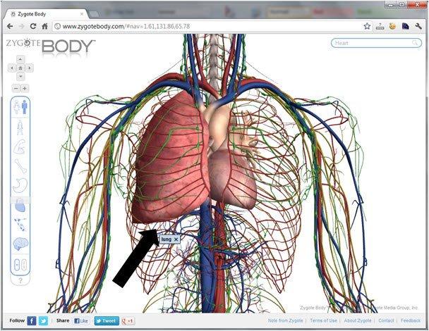 Zygote Body Review: Free 3D Human Anatomy App - BuiltLean