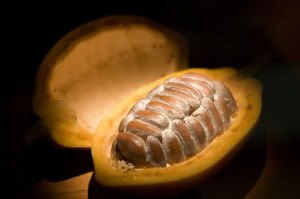 Metabolism-Boosting Food #5: Cacao