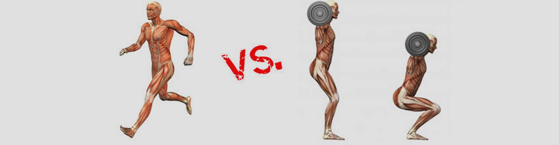 cardio vs. weight training: which is better for weight loss?, Muscles