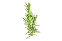 Healthy-herbs-1