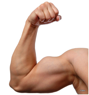 Best-biceps-exercise