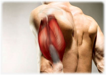 Best-triceps-exercise
