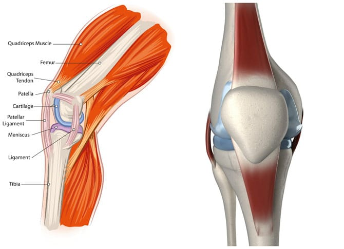 7 Best Exercises To Rehab Patellar Tendinitis Builtlean