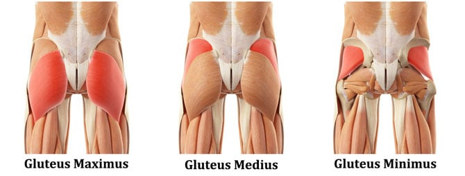 Image result for glutes