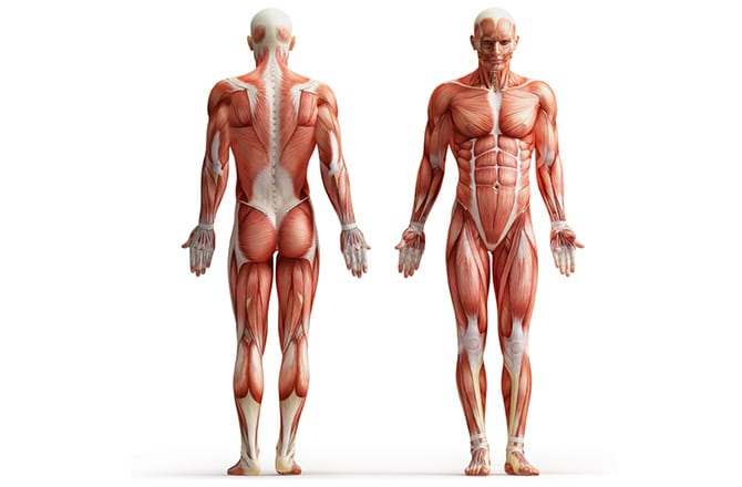 muscles-to-stretch-vs-strengthen